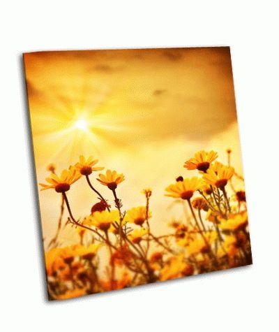 Картина полевая ромашка