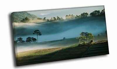 Картина поля прованса в тумане