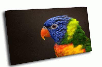 Картина попугай