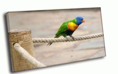 Картина попугай на канате