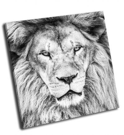 Картина портрет африканского льва
