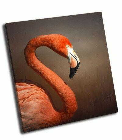 Картина портрет фламинго