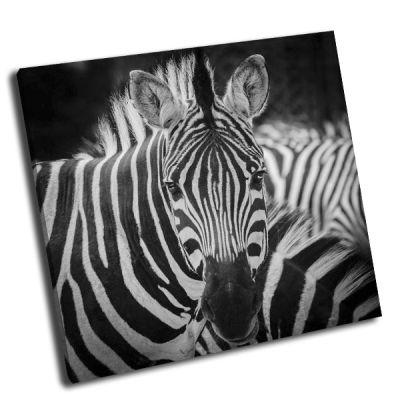 Картина портрет зебры