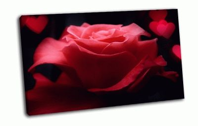 Картина прекрасная роза