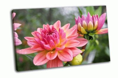 Картина прекрасные осенние цветы георгины, астры