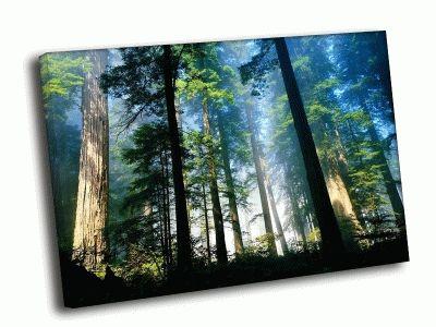 Картина прекрасный лес