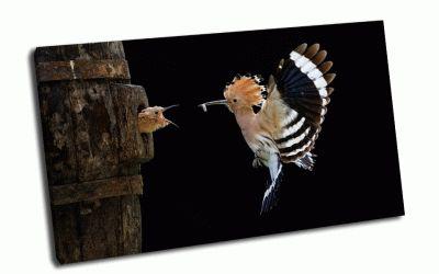 Картина птица кормит птинца на лету