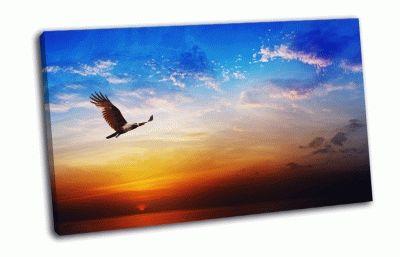 Картина птица на красивом закате