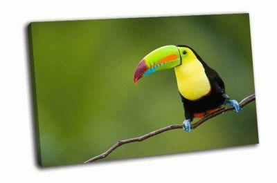 Картина птица тукан