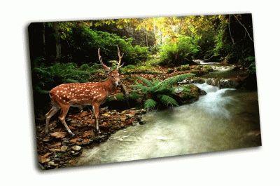 Картина пятнистый олень в тропиках