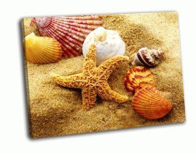Картина ракушки и морская звезда на пляже