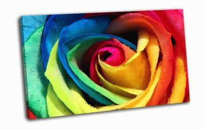 Картина разноцветные лепестки розы