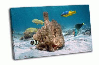 Картина разноцветные тропические рыбки