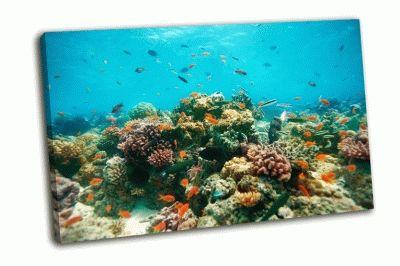 Картина риф подводных рыб и кораллов