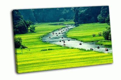 Картина рисовые поля у реки вьетнам