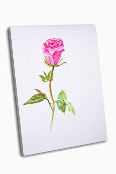 Картина роза акварелью