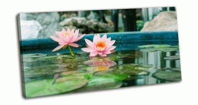 Картина розовая водяная лилия