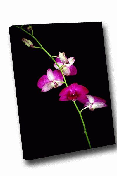 Картина розовый цветок