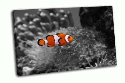 Картина рыба-клоун