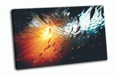 Картина рыба-пиранья