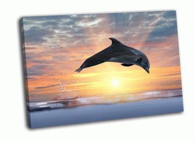 Картина серый дельфин на закате