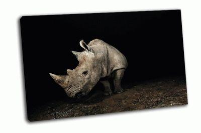 Картина серый носорог