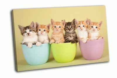 Картина шесть милых котят