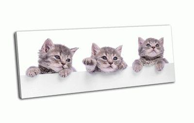 Картина шотландские котята