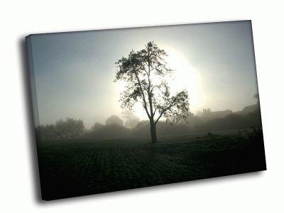 Картина силуэт дерева на поле
