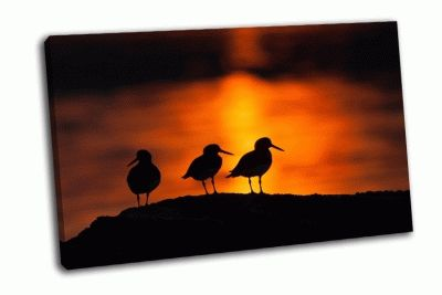 Картина силуэты птиц в полночь