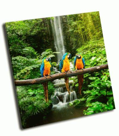 Картина сине-желтый ара