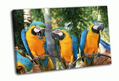 Картина сине-золотой попугай