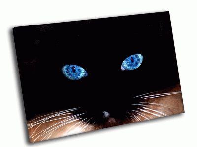Картина синие глаза кошки