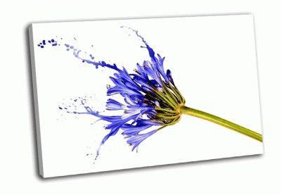Картина синий цветок с брызгами