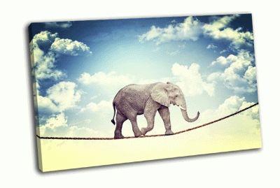 Картина слон акробат