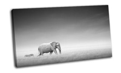 Картина слон и зебра на равнинах этоша