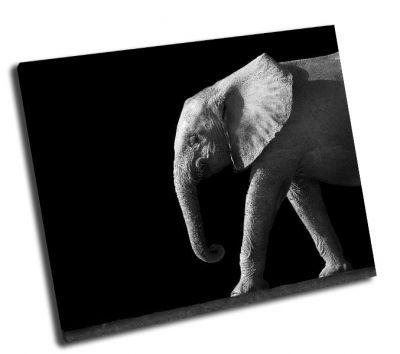 Картина слон на черном фоне