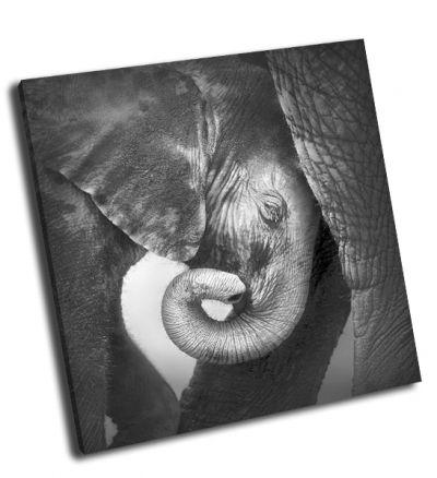 Картина слоненок ценящий комфорт