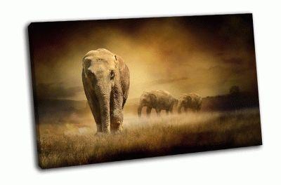 Картина слоны на закате