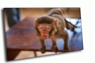 Картина смешная обезьяна с языком
