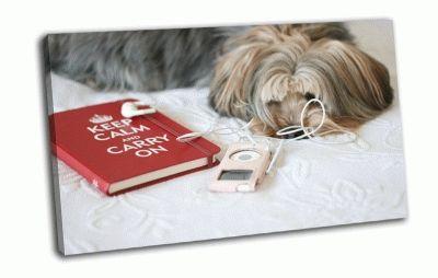 Картина собака и книга