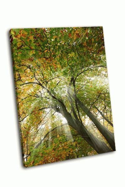Картина солнечные лучи сквозь дерева