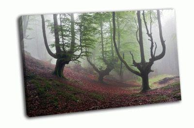 Картина таинственный буковый лес в тумане
