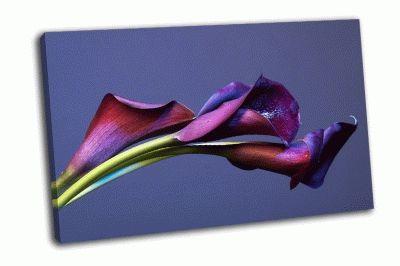 Картина темно-фиолетовые каллы на синем фоне