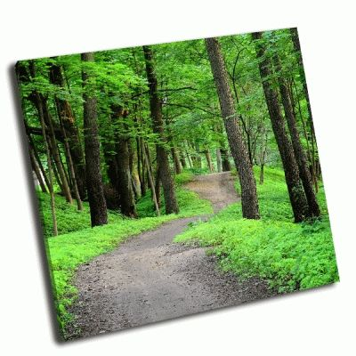 Картина темный лес и дорога