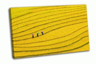 Картина террасные рисовые поля