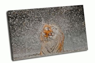 Картина тигр в брызгах воды