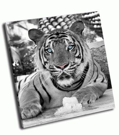 Картина тигр в черно-белом цвете