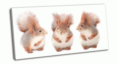 Картина три белочки едят фундук