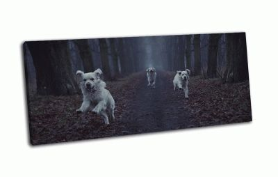 Картина три белые собаки в лесу